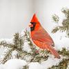 Cardinal 8736 (horizontal)