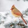 Cardinal 4360