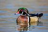 Wood Duck Drake 0938