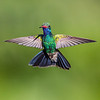 Broad-billed Hummingbird 0858