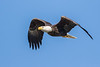 Bald Eagle Flight 3024
