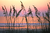 Sea Oat Sunrise, Outer Banks, NC
