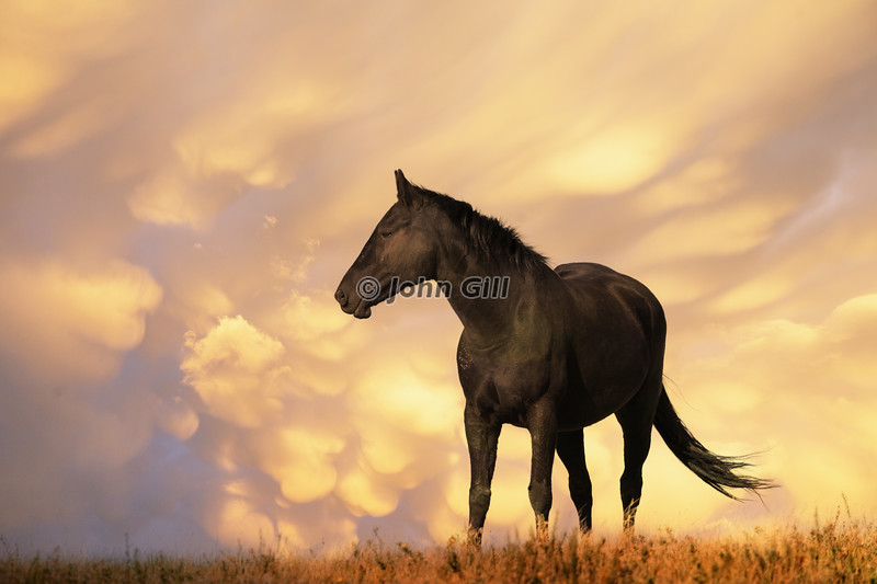 A Horse Called Stormy