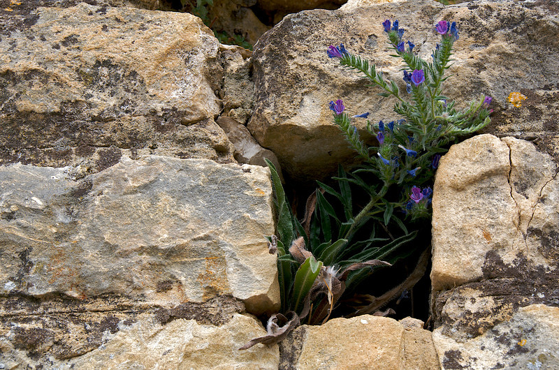 Quintessential Provence – rocks and flora