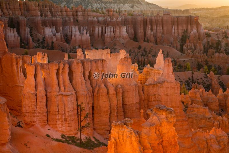 Dawn Glow, Bryce Canyon