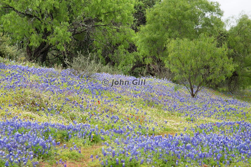 Texas Hill Country #5920