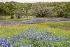 Texas Hill Country #5917
