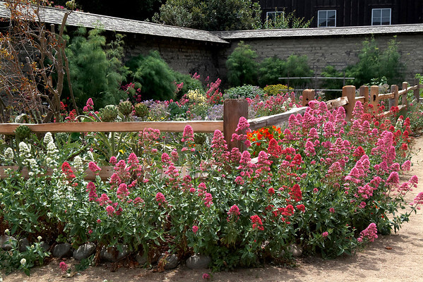 Garden at Cooper Molera Adobe Monterey, California
