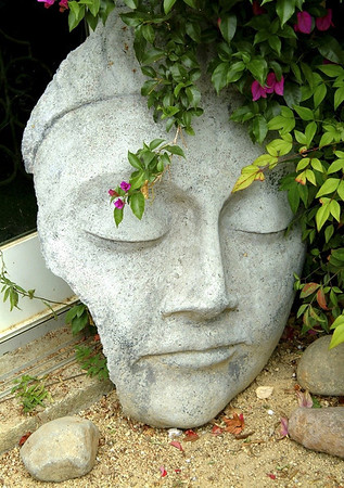 Meditative Face in a Garden Point Reyes Station, California