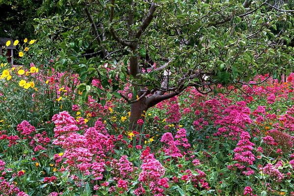 Cooper-Molera Historic Adobe Gardens Monterey, California