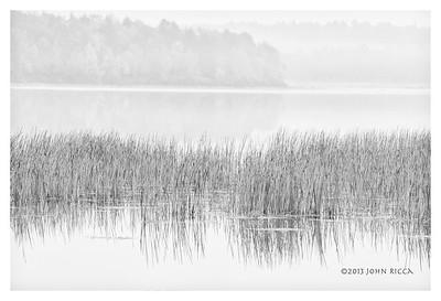 Lake Joseph Grasses (b&w)