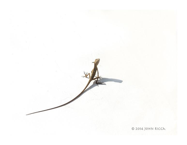 Gecko, Hue, Vietnam