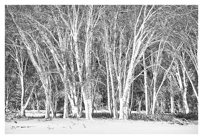 Negative Woods