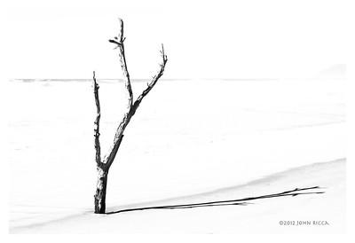 Tree & Shadow