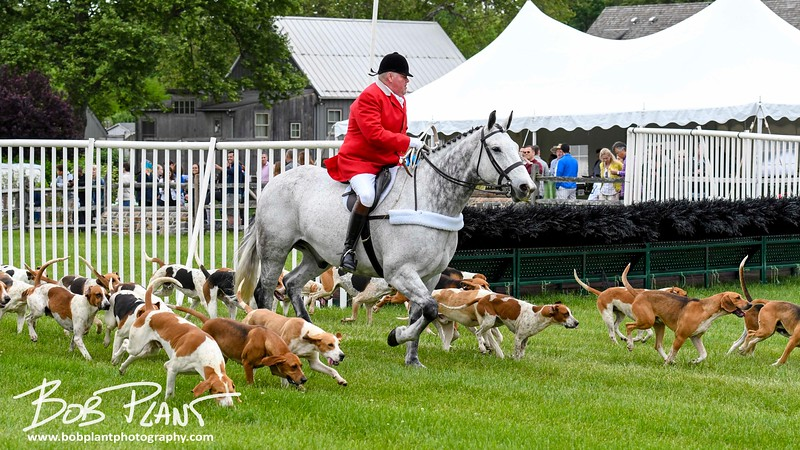 2017 Radnor Hunt Races