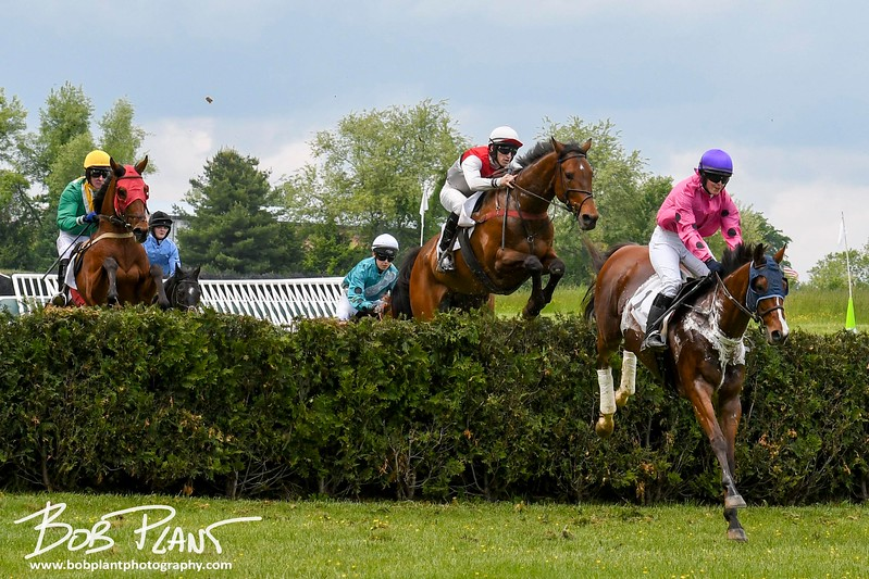 The Willowdale Steeplechase 2017