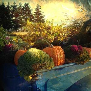 Autumn Colors on Sauvie Island