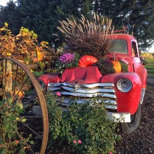 Vintage Truck on Sauvie Island in Autumn