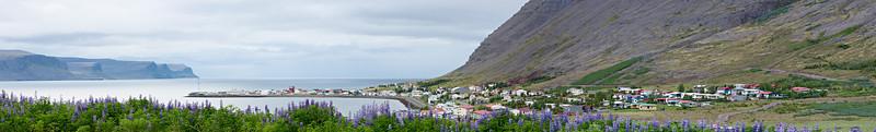 The village of Patreksfjörður, with Alaskan lupine (Lupinus nootkatensis) flowers in the foreground. Taken in the Westfjords of Iceland.