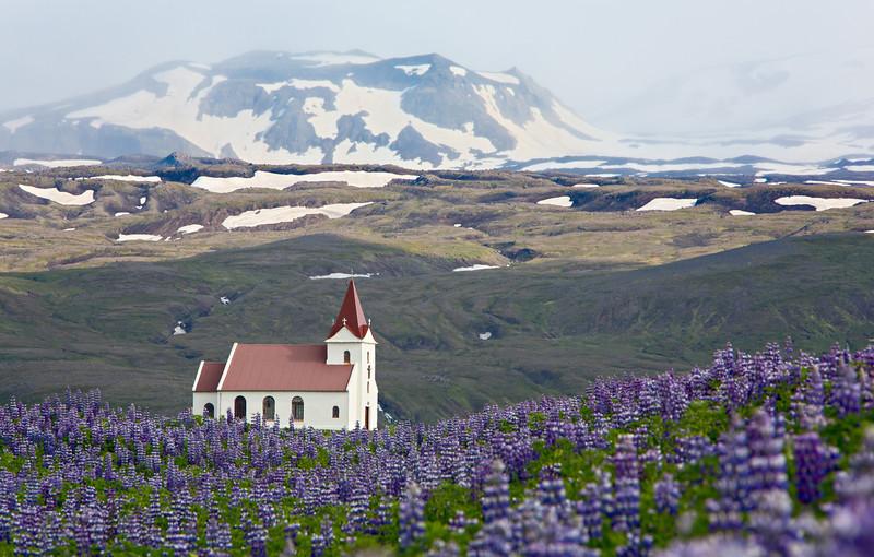 Ingjaldshóll church, with Alaskan lupine (Lupinus nootkatensis) in the foreground. Taken near Hellisandur, Snaefellsnes Peninsula, West Iceland, Iceland.