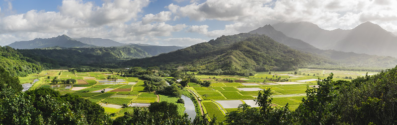 Rice Fields Panorama