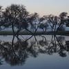 MorningTrees