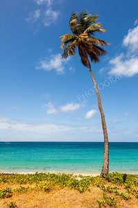 Palm Tree on Tropical Beach against Ocean and Blue Sky