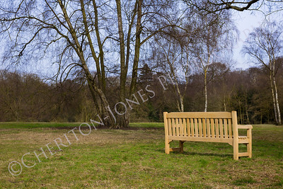New Wooden Park Bench on Green Grass Meadow with Trees
