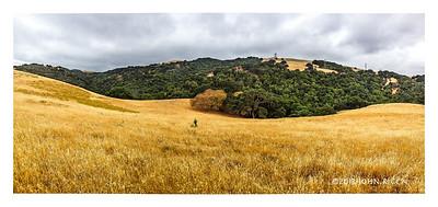 Briones Panorama