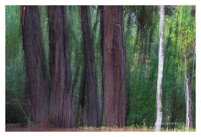 Jack London State Park Impression 1