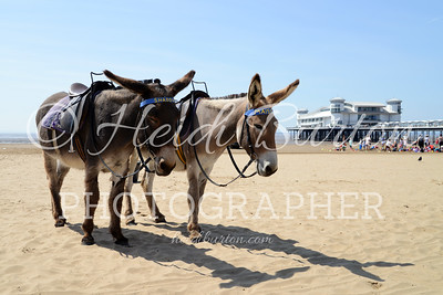 Weston-super-Mare Donkeys by Heidi Burton, Weston-super-Mare Photographer