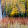 Fall Trees and Grasses