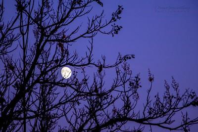 moon/000018 **
