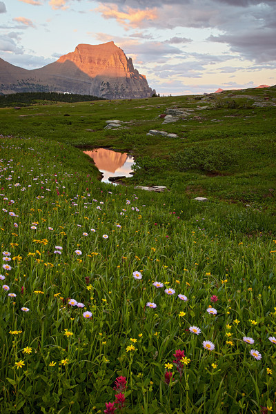 """Heaven On Earth""<br /> <br /> A high-altitude meadow of alpine wildflowers leads to a seasonal tarn reflecting Piegan Mountain. Taken in Glacier National Park, Montana, USA."