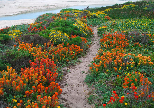 Wildflower Path at Ribera Beach