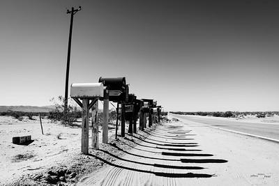Desert denizens