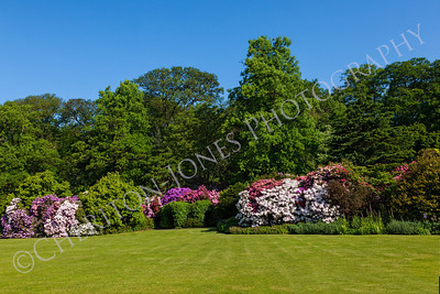 Rhododendron Azalea Bushes and Trees in Beautiful Garden