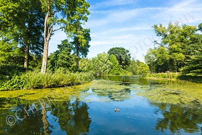 Lush Green Woodland Park Reflecting in Tranquil Pond