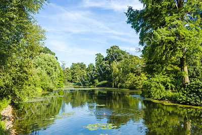 Tranquil Pond Framed by Lush Green Woodland Park