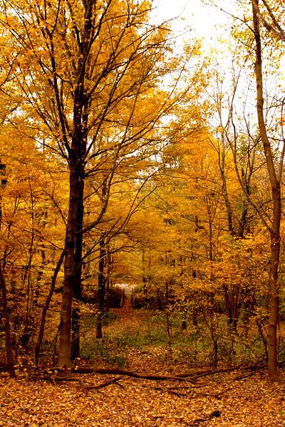 Fall, Cherokee Park