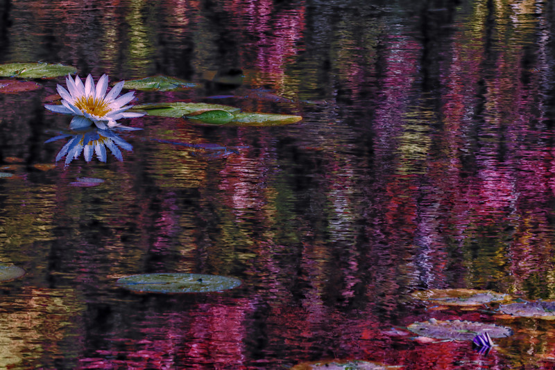 NBa1421 Waterlilly Impression, Atlanta, GA
