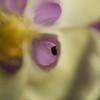 Bug inside flower perianth, Auckland Domain Park, Auckland, New Zealand