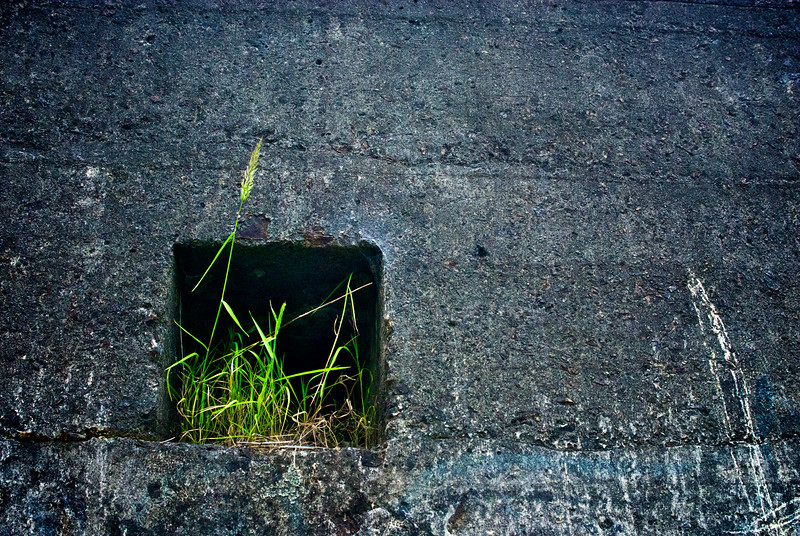 concrete wall with green grass, abandoned gold mine, north island, New Zealand