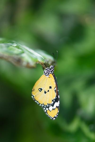 Butterfly, Otago Museum, Otago, New Zealand