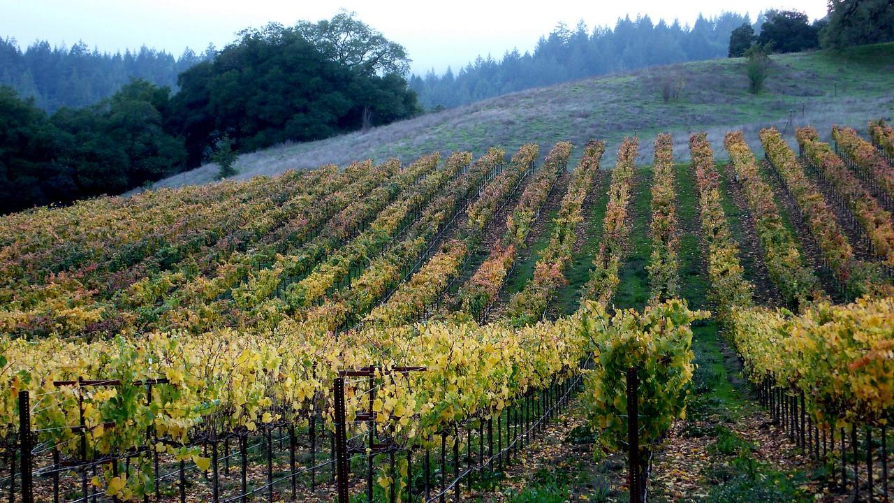 Autumn Vineyards Healdsburg, California