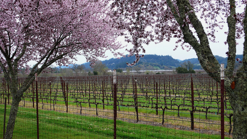 Knight's Valley Springtime Calistoga, California