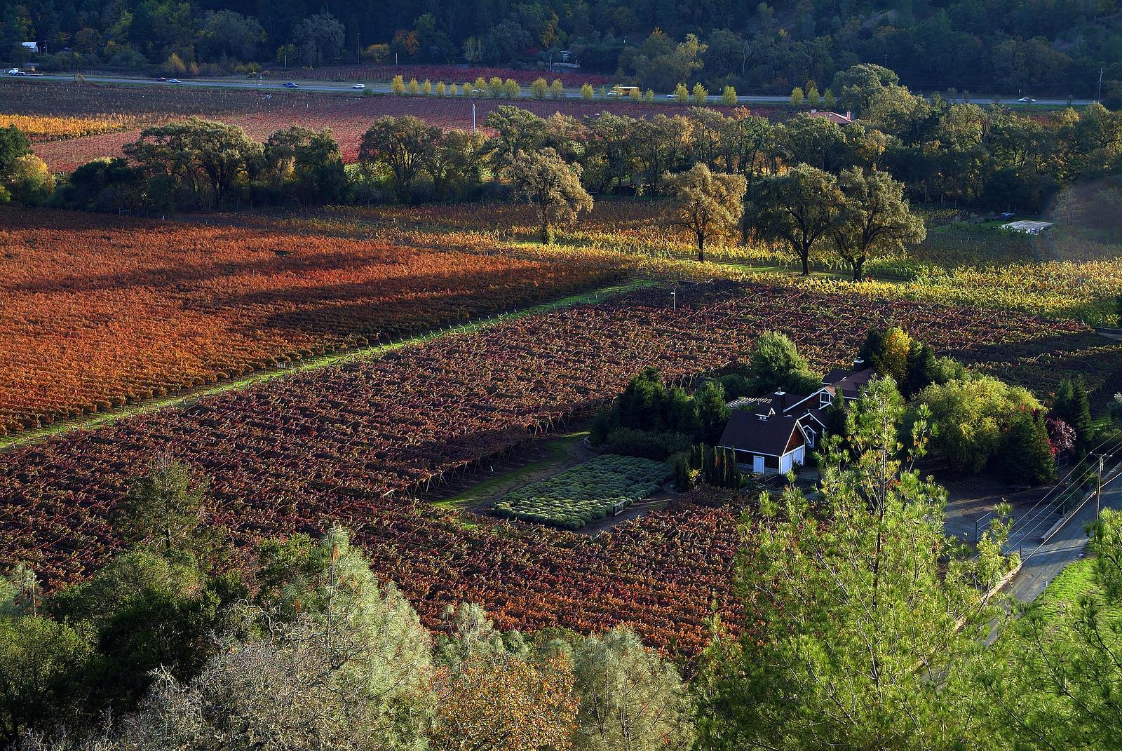 Aerial View of Vineyards Napa Valley, California