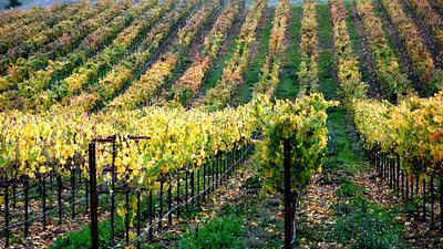 Autumn Vineyards Healdsburg, California