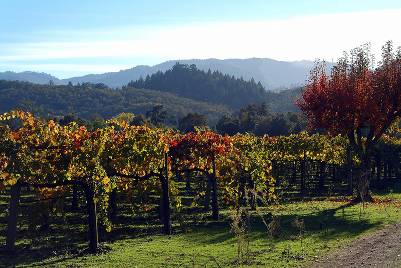 Autumn Vineyards Napa Valley, California