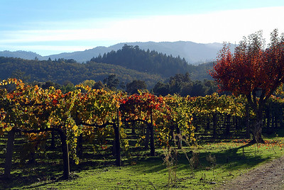 Autumn Vineyards Napa Valley, California